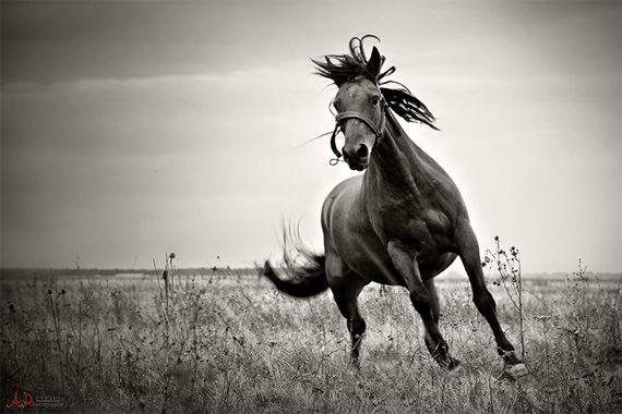 black & white photography tips