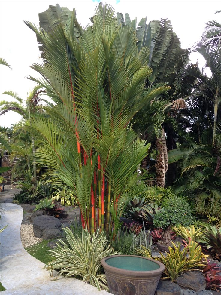 Fernery Ideas Design Shade Garden
