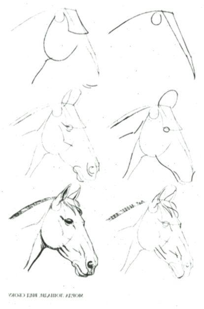 Lernen Sie Schritt für Schritt zu zeichnen: Tier ...