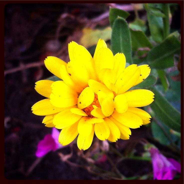 Pequeña #flor en el #jardin #flower #color