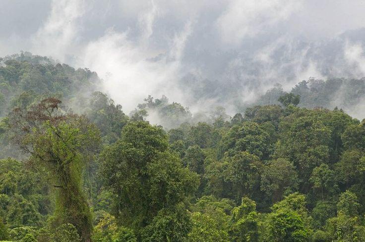 Käferparadies: Im Bodenstreu im Halimun National Park von Java fanden die...