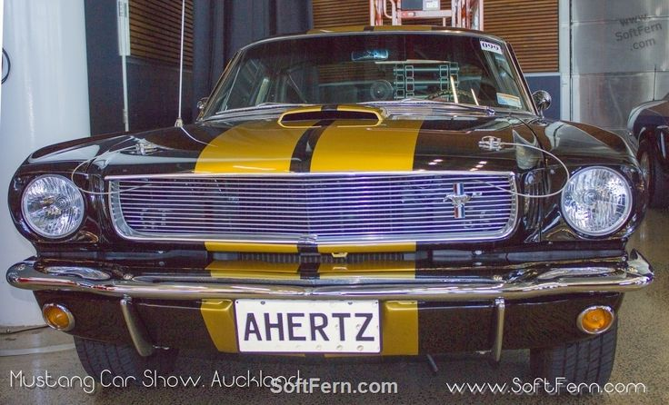 1966 Ford Shelby Mustang GT350-H the Hertz version. The standard GT 350H color scheme is black with two broad gold stripes—a sensational, crowd-stopping combination. .        Mustangs in Auckland. ... 28  PHOTOS        ... Mustangs in Auckland at Labour Weekend: the 37th National Mustang Convention took place in Auckland ANZ Viaduct Events Center.        More details:         http://softfern.com/NewsDtls.aspx?id=1113&catgry=12            SoftFern News, SoftFern Sport News, Auckland, SoftFern…