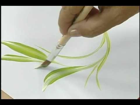 Orquídeas pincel triangular - Condor (+lista de reprodução)