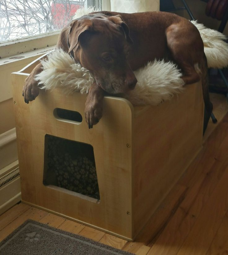 Converting a toy box into a dog proof litter box