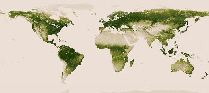 NASA cria mapa interativo que mostra florestas no mundo inteiro – CicloVivo