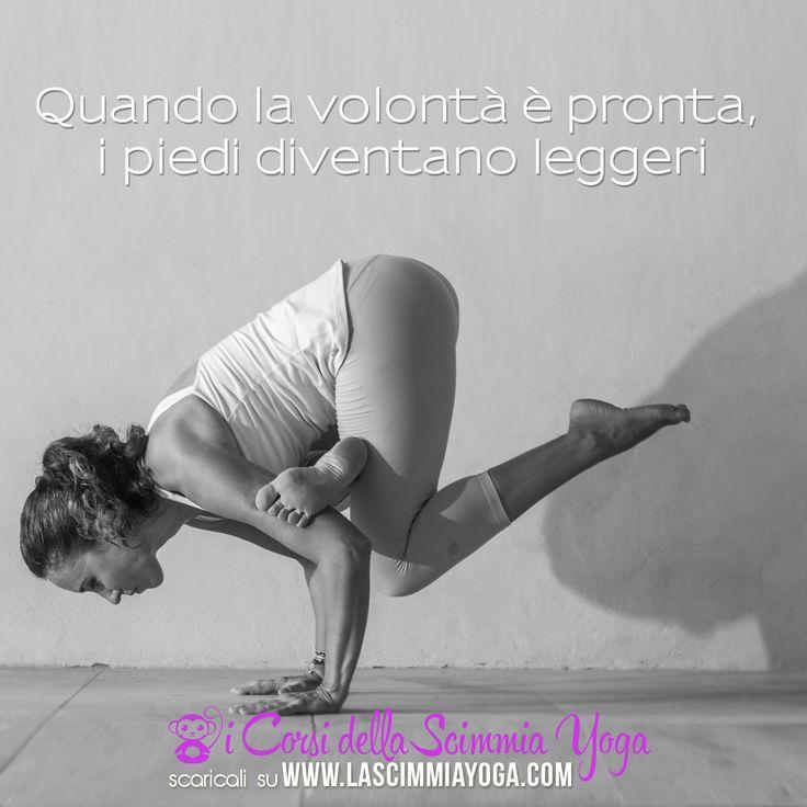 #Yoga #Vinyasa #FaiYoga #LaScimmiaYoga