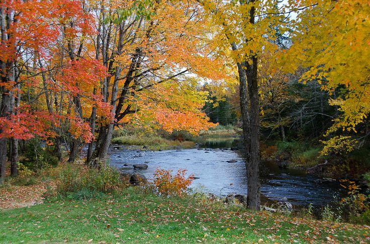 Tranquility ..  Maine backwoods