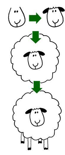 Google Afbeeldingen resultaat voor http://www.leukvoorkids.nl/img/knutselen/cartoon-schaap-tekenen.gif