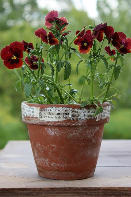 paper on pot - great addition to weathered terra-cotta pot!
