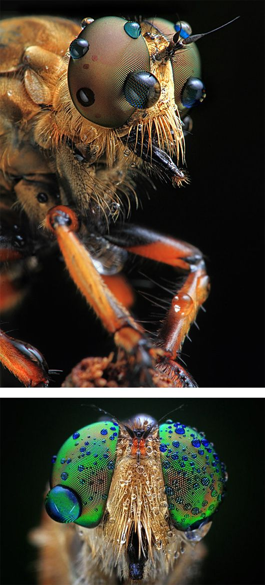 Insects in Your Face: Macro Photography by Shikhei Goh | Inspiration Grid | Design Inspiration