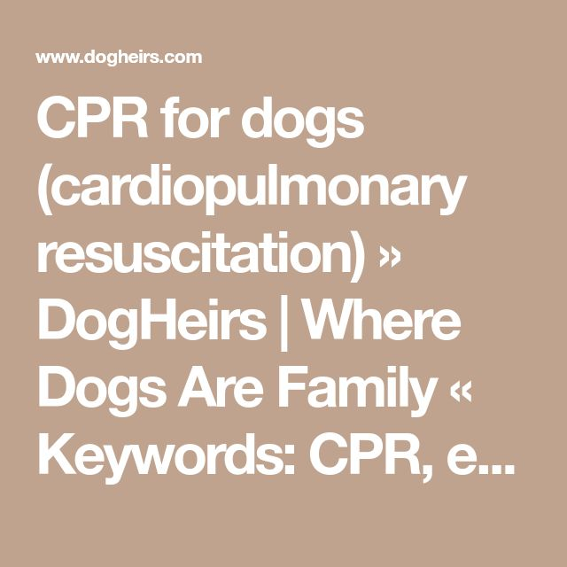 CPR for dogs (cardiopulmonary resuscitation) » DogHeirs | Where Dogs Are Family « Keywords: CPR, emergency, cardiac massage, cardiopulmonary resuscitation