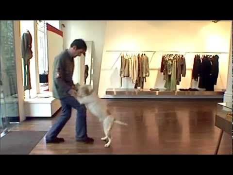 Дрессировка собак дома с нуля - как правильно встречать людей