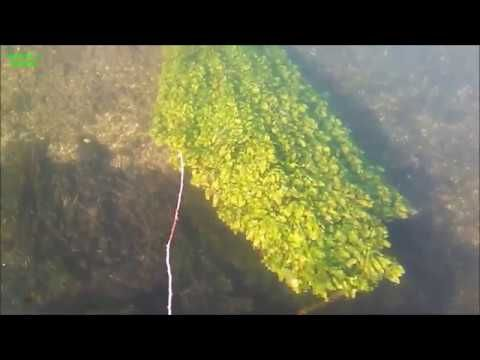 Experiment: Can We Grow Our Food For Free Above OR INSIDE In Rivers ??? ...