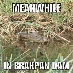 The kids are more dangerous than the crocodiles in Brakpan. . . #brakpan #benoni #boksburg #tapidtriangle