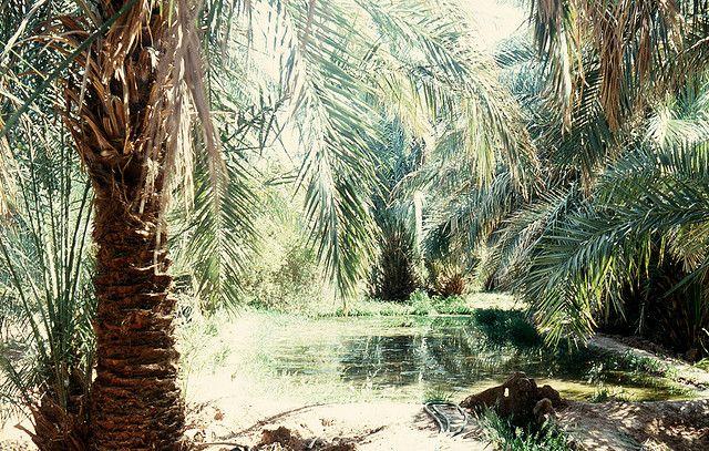 Oasis, Adrar, Algeria