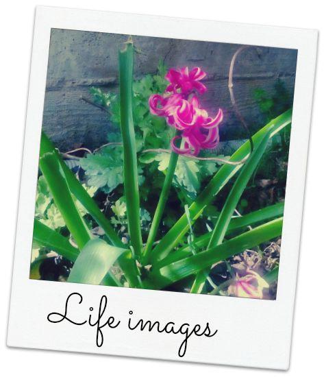 Το e - περιοδικό μας: Ένα λουλούδι, η αφορμή...