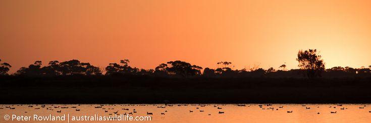 #Sunset over the treatment plant on the #Victorian Coast #aus_wildlife