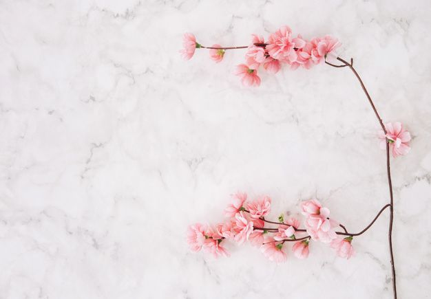 Pink Cherry Blossom Over The Marble Textured Background Cherry Blossom Background Cherry Blossom Textured Background