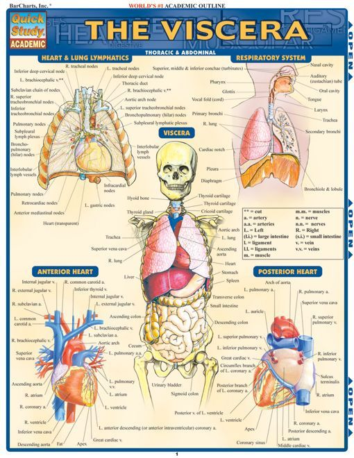 Free Anatomy and Physiology with Integrated Study Guide ...