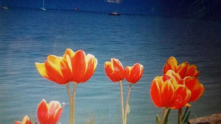 Στα απλά και καθημερινά  βρίσκεις τη χαρά  και τη μαγεία της ισορροπίας  στη ζωή!!!!!!!!!
