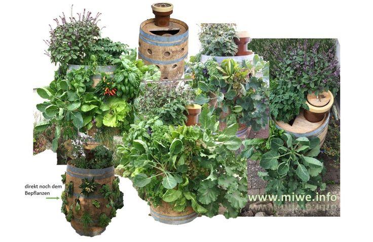 Ich habe ein gebrauchtes Eichenfass umfunktioniert und in ein Pflanzfass mit integriertem Mini- Komposter verwandelt. Neben den sehr gut wachsenden Pflanzen leben auch über 200 Kompostwürmer im Fass und produzieren so wertvollen BIO-Dünger.