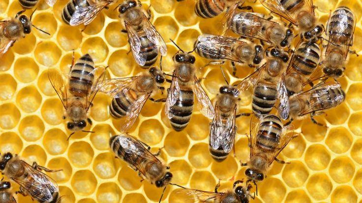 Ο σύμμαχος του μελισσοκόμου στο διαδίκτυο  Το Μελισσοκομικό Εργαστήρι Κρήτης αποτελεί μια εταιρεία η οποία δραστηριοποιείται στον χώρο της εμπορίας, κατασκευής και εισαγωγής μελισσοκομικών εφοδίων αλλά και μηχανημάτων από το 1986.  https://www.imonline.gr/gr/kataskevi-istoselidas/o-summaxos-tou-melissokomou-sto-diadiktuo-1223