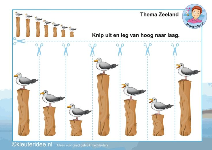 Knip de meeuwen uit en leg ze van hoog naar laag, thema Zeeland, kleuteridee, Kindergarten math activity, free printable.