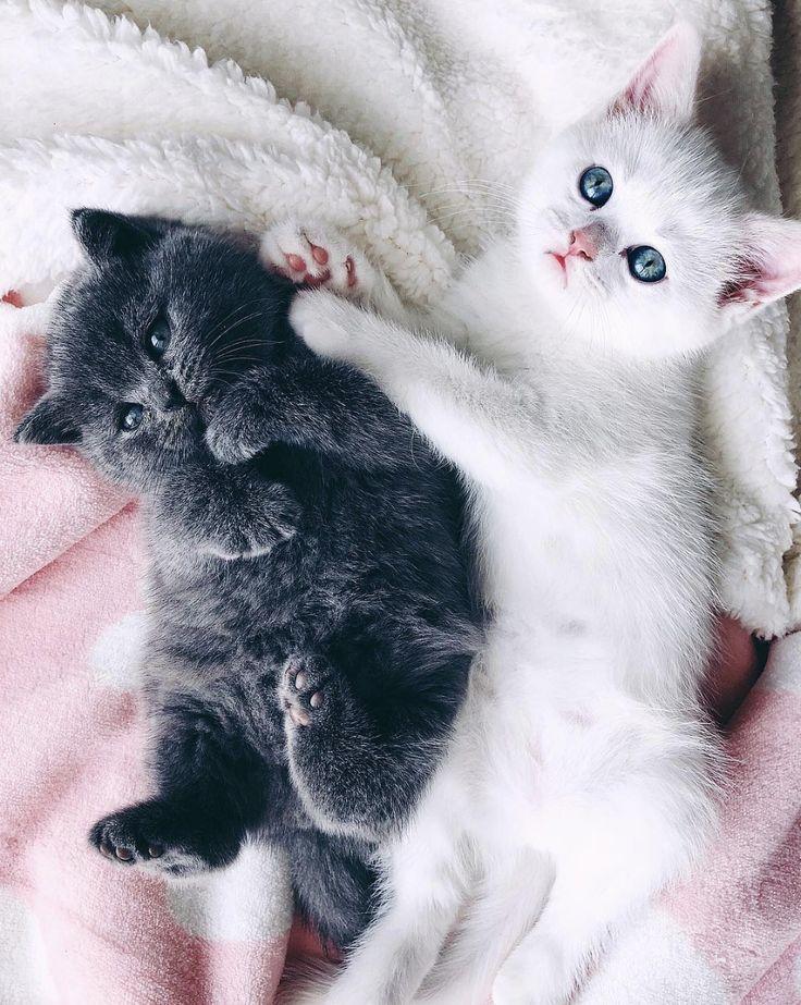 одежда, смотреть картинки самых милых котят все свои печали