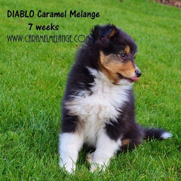 www.caramelmelange.com