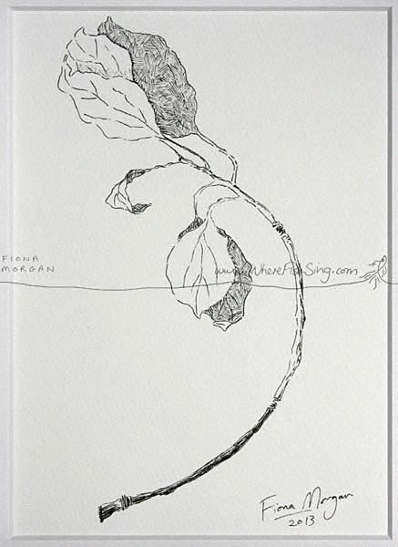 WhereFishSing.com Fiona Morgan, pen drawing 'Meditative Study' #WhereFishSing HALF MOON Branch Matted Nature illustration ORIGINAL Botanical Drawing, Black & White, pen & ink, zen, mindfulness
