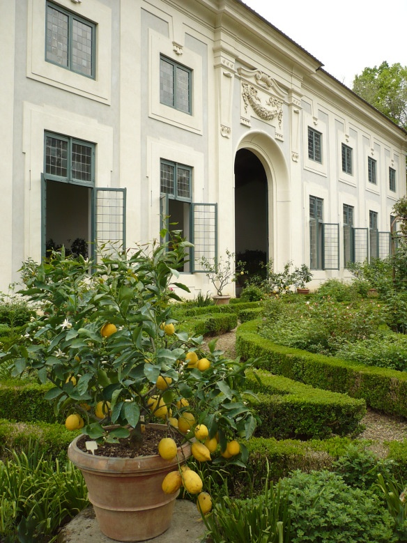 The citrus house at Pitti Palace