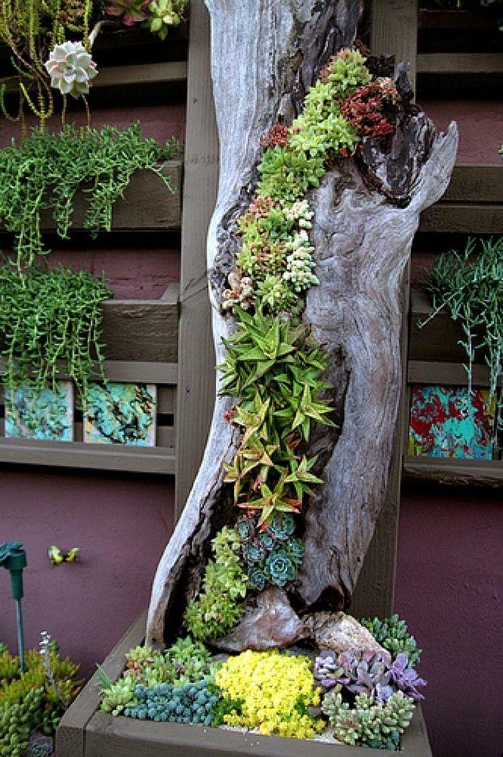 50 Wege zum Erstellen eines verzauberten saftigen Gartens in Ihrem Garten