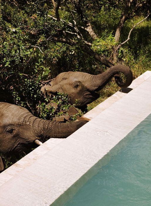 Royal Malewane Private Game Lodge – South Africa                                                                                                                                                                                 More
