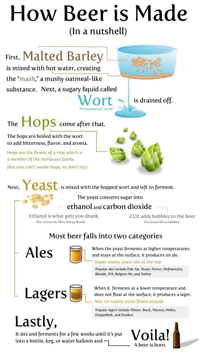 Interesting facts about beer can
