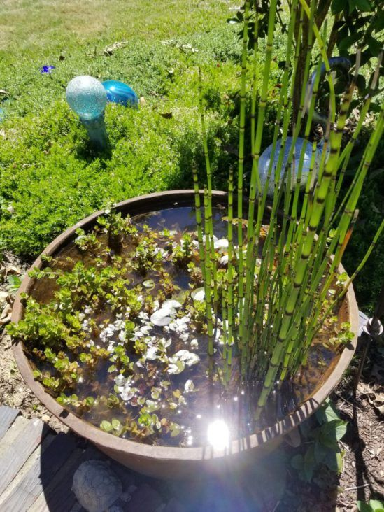 Best 25 outdoor fish ponds ideas on pinterest outdoor for Outside goldfish pond