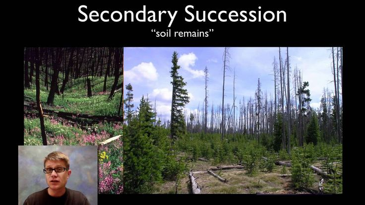 Succession video from Bozeman Science