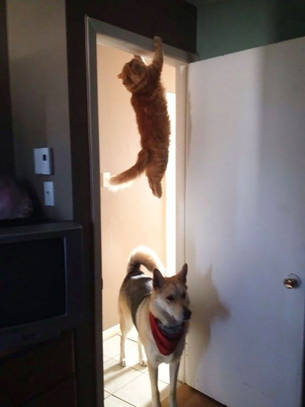 When your boss stops by to check in on your team. | 44 Cat Reactions That Perfectly Sum Up Your Job