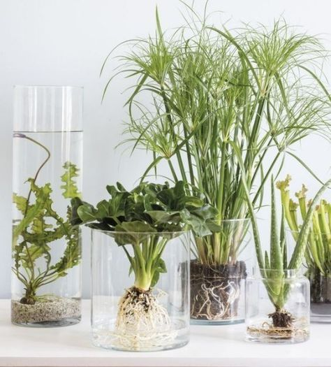 Bring the pond into the room? Yes, it works with these aquatic plants!
