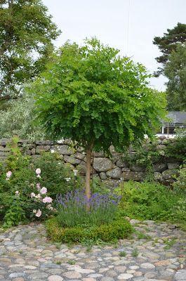 Kungsbacka Trädgårdsdesign: Prydnadsträd