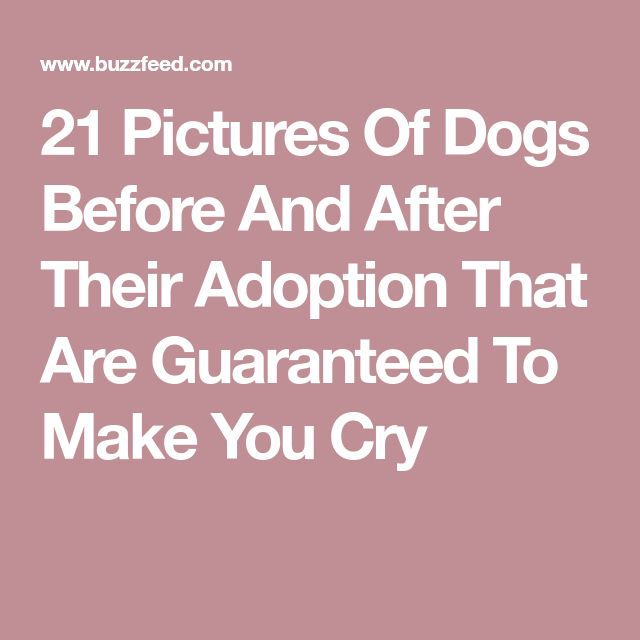 21 Pictures Of Dogs Before And After Their Adoption That Are Guaranteed To Make You Cry