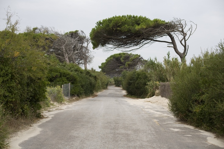 Pineta toscana vicina alle spiagge bianche