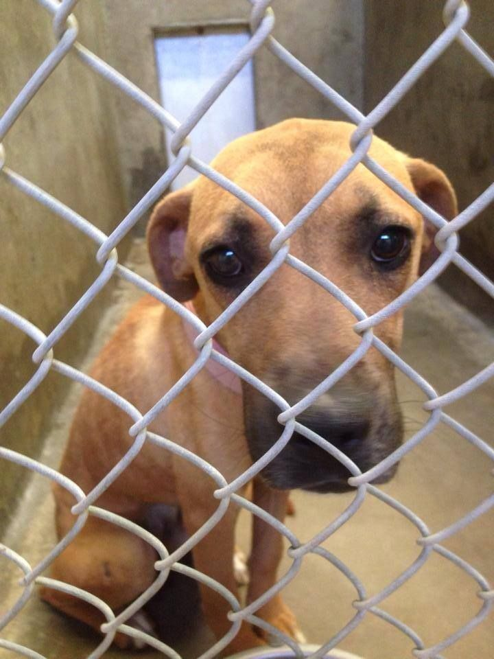10070 Best S A F E Rescued Shelter Pets Images On