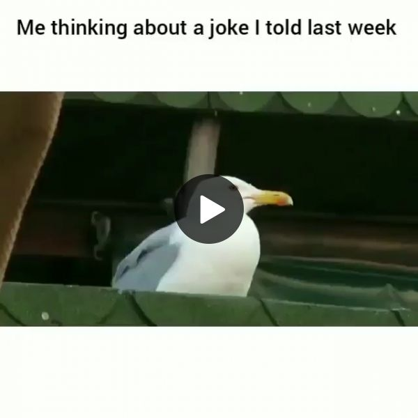 Me Thinking About A Joke I Told Last Week Funny 9gag Lol Lmao