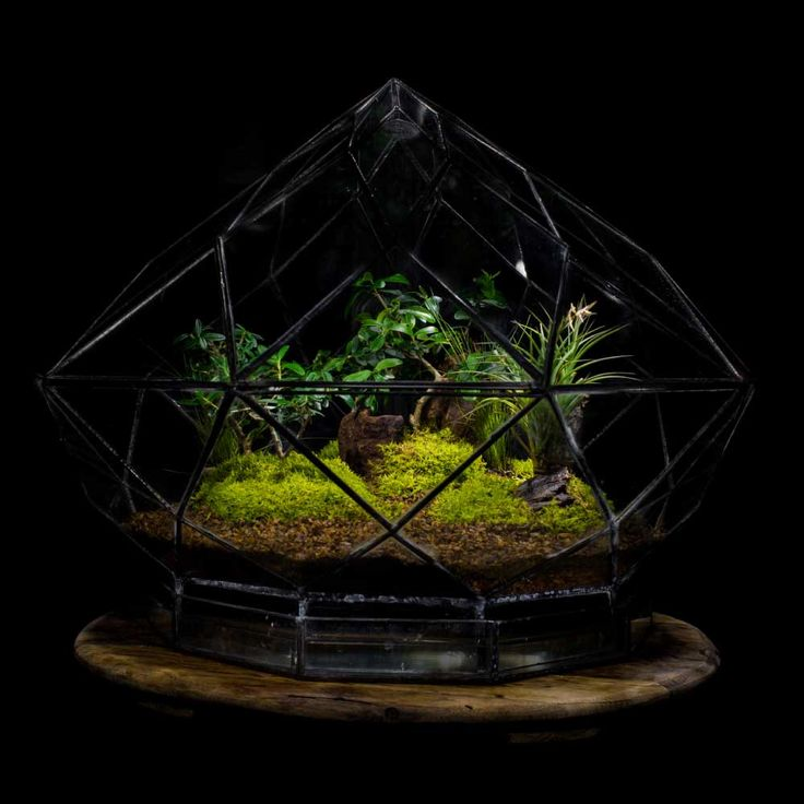 Diamond Terrarium by Angles & Earth.