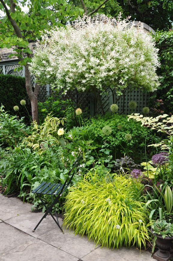 Dwarf Hydrangea Landscaping