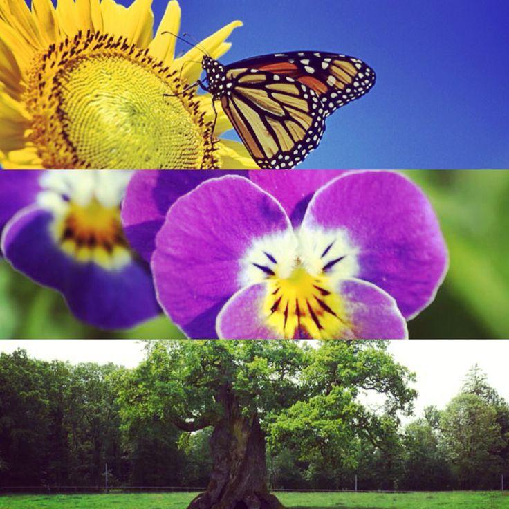 C'est le Printemps, une journée (très)spéciale... Qui annonce le renouveau, l'épanouissement, un monde coloré fait de fleurs et de bonne humeur  #chene #violette #tournesol #papillon #fleur #bonheur #jardin #famille #printemps #princessesrebelles #love #joie #partage #welcomeinmylife