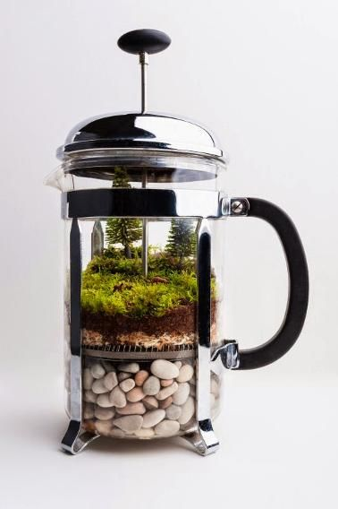 Coffee fans will get a kick out of this  terrarium you build inside a French Press.