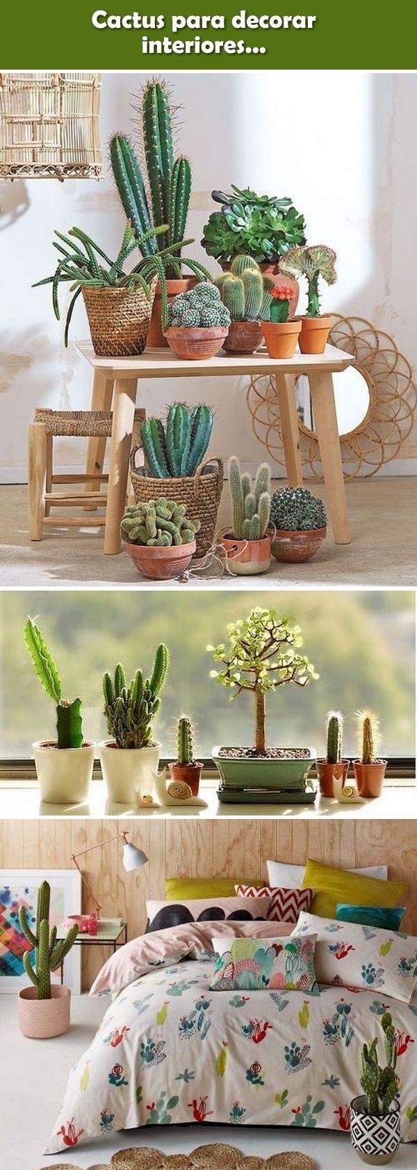 Decoración de interiores con cactus. Plantas para decorar interiores. #cactus #plantas #plantasdeinteriores