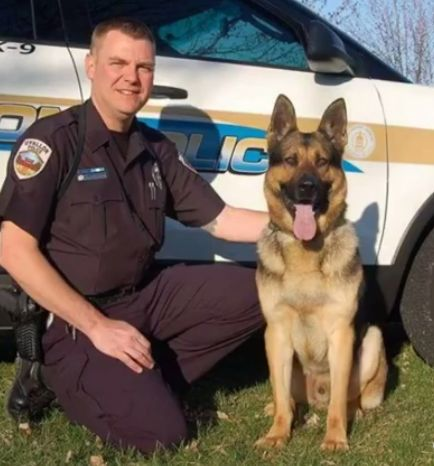 K9 Ares - E.O.W. 30 May 2017 O'Fallon Missouri Police Department Handler Officer Tom Thompson  From the Department: We are saddened to announce the death of OPD K9 Ares. Ares lost his battle with cancer this evening at the home of his handler Officer Tom Thompson. Ares' remains were escorted to Baue Funeral Home in St. Charles by the rest of our K9 teams. On arrival Ares was saluted by K9 teams from around the area that lined the entrance. Ares served the residents O'Fallon for almost 8…