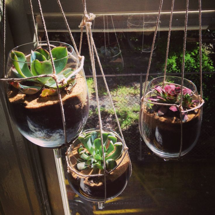 Broken Wine Glasses From Our Move Made Great Planters For Our Hanging Succulents Ideas For The